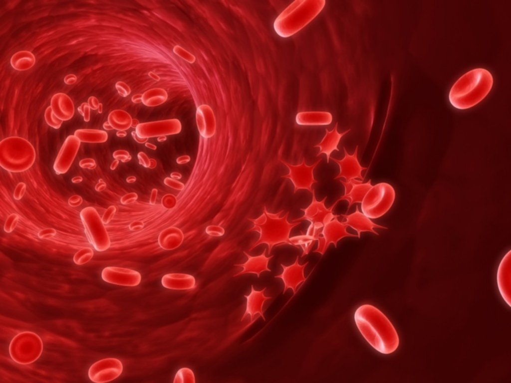 red-blood-cells-1024×768