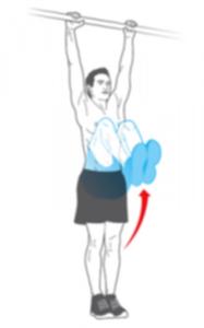miesnie brzucha 01 187x300 - Trening w domu - Ćwiczenia na brzuch