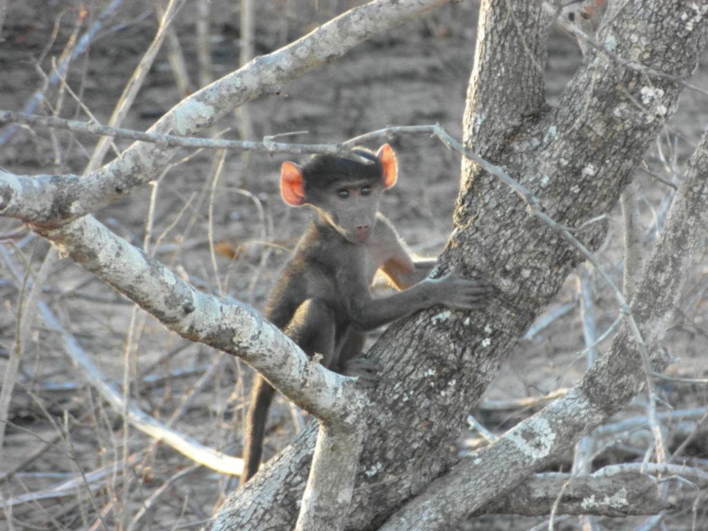 RPA 059 1024x768 - Park Narodowy Krugera - safari!