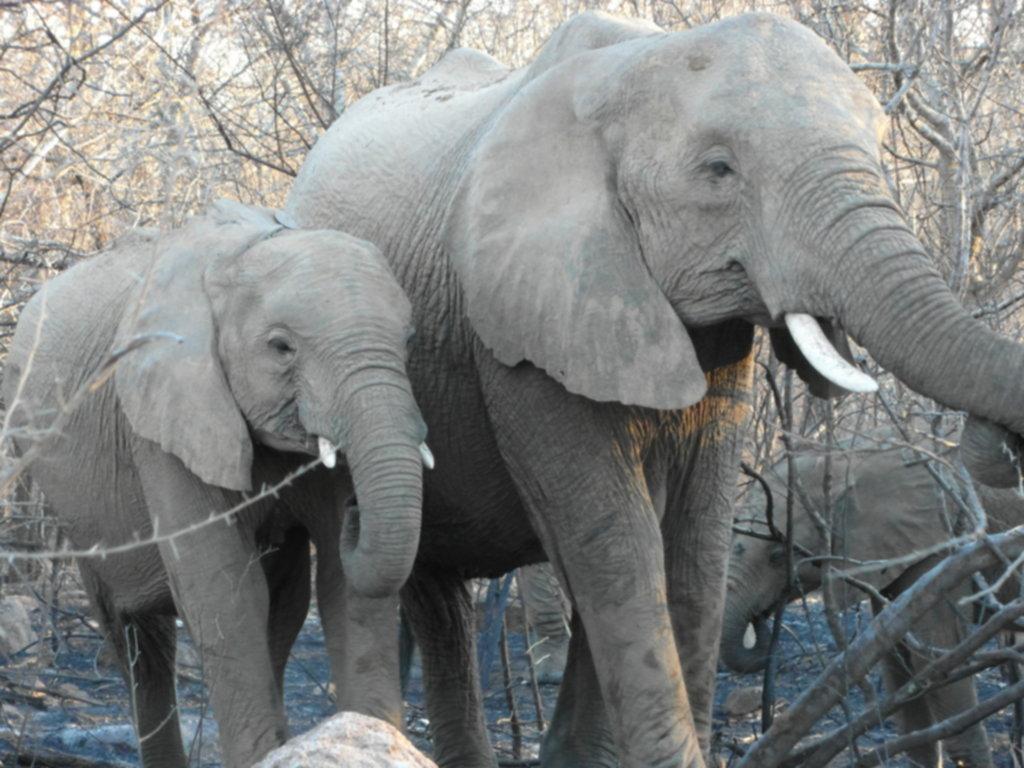RPA 088 1024x768 - Park Narodowy Krugera - safari!