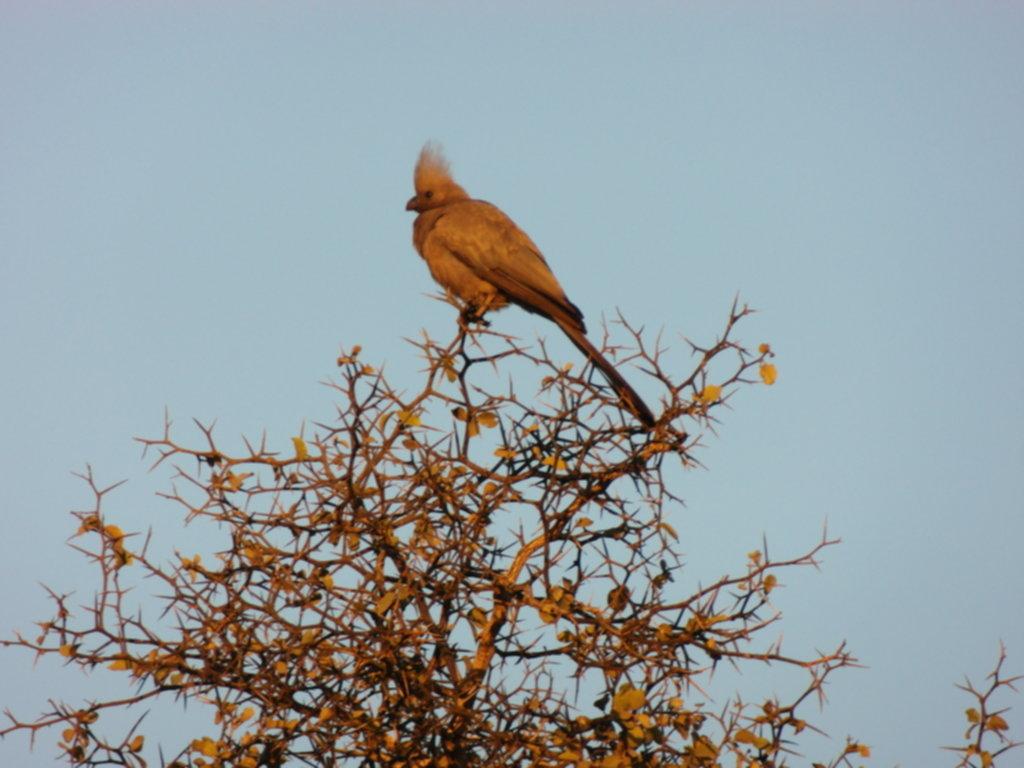RPA 197 1024x768 - Park Narodowy Krugera - safari!