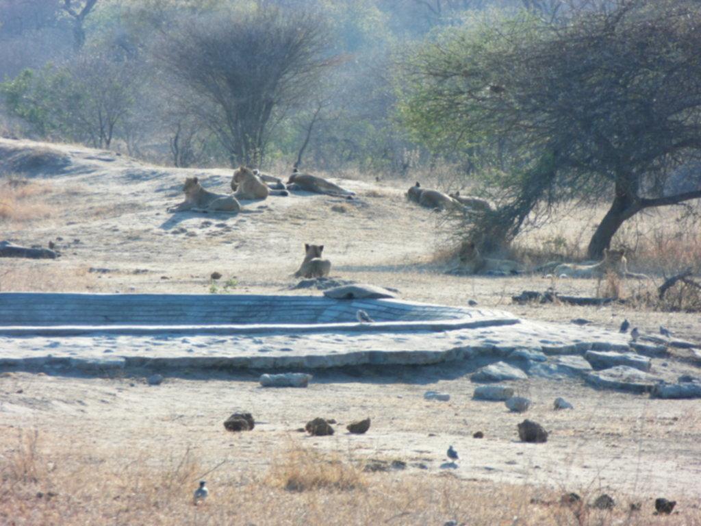 RPA 215 1024x768 - Park Narodowy Krugera - safari!