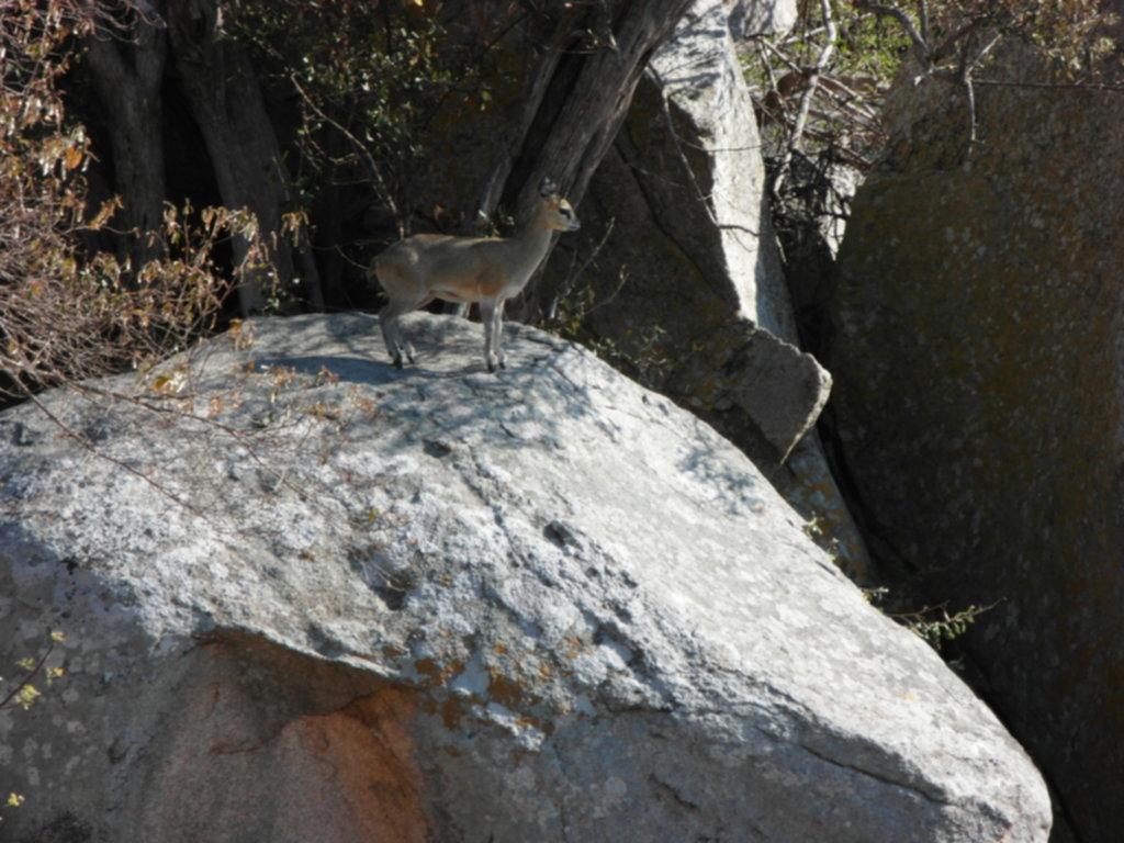 RPA 287 1024x768 - Park Narodowy Krugera - safari!