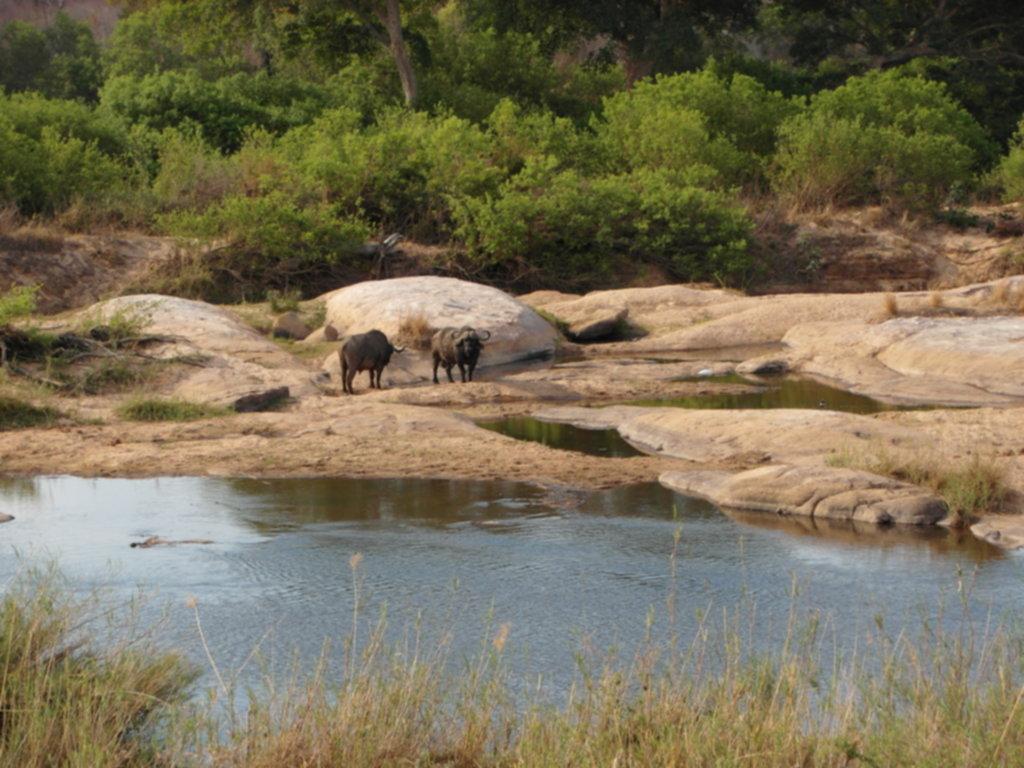 RPA 353 1024x768 - Park Narodowy Krugera - safari!