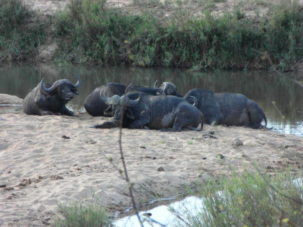 RPA 379 1024x768 - Park Narodowy Krugera - safari!