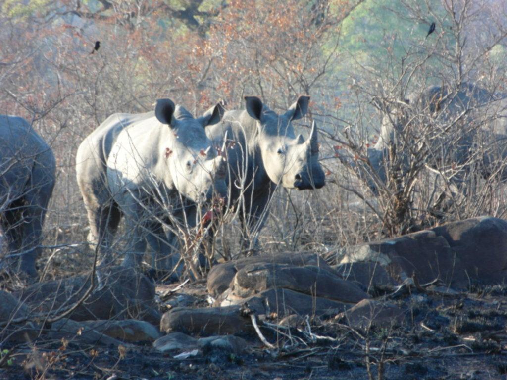 RPA 469 1024x768 - Park Narodowy Krugera - safari!