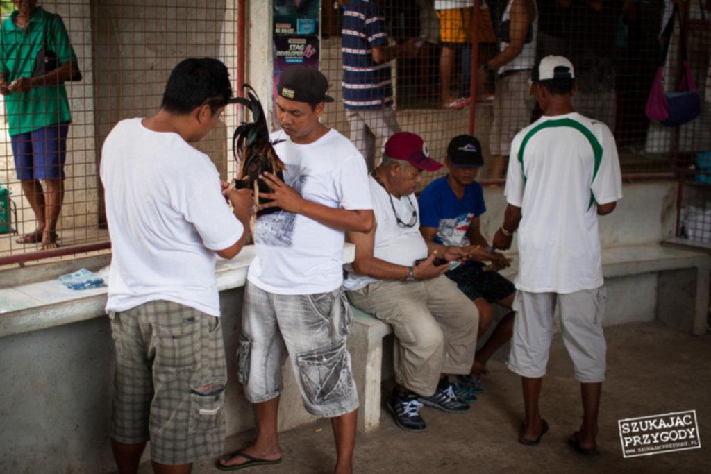 IMG 8121 1024x683 - Walki kogutów na Filipinach
