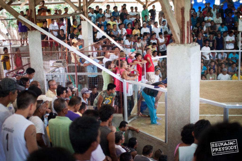 IMG 8128 1024x683 - Walki kogutów na Filipinach