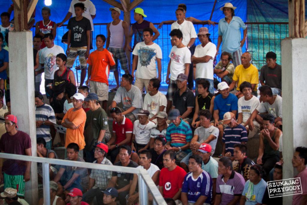 IMG 8143 1024x683 - Walki kogutów na Filipinach
