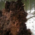 2012 12 15 13.17.13 150x150 - Trzydniowiański Wierch