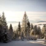 IMG 0115 150x150 - Trzy Korony w zimie
