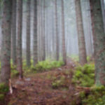 IMG 4483 150x150 - Rewelacyjna pogoda w Tatrach Zachodnich