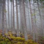 IMG 4486 150x150 - Rewelacyjna pogoda w Tatrach Zachodnich