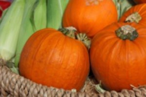 autumn 2855 1280 300x199 - Pestki dyni – olej z pestek dyni – właściwości