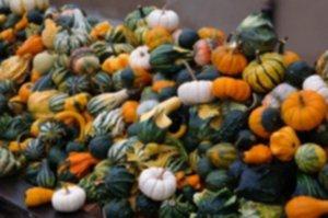 pumpkins 228500 1280 300x199 - Pestki dyni – olej z pestek dyni – właściwości