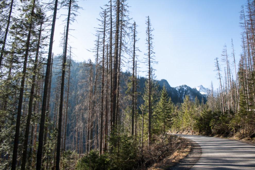 tatry wysokie zima dolina 5 stawow 10 of 221 - Szpiglasowy Wierch i Kozia przełęcz w zimie
