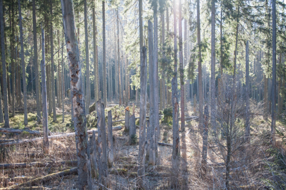 tatry wysokie zima dolina 5 stawow 5 of 221 - Szpiglasowy Wierch i Kozia przełęcz w zimie