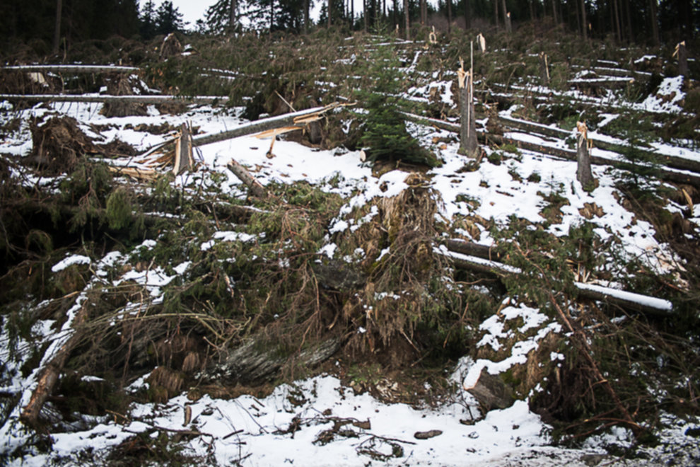 wycinka drzew tatry 0104 - Wycinka drzew w Tatrach