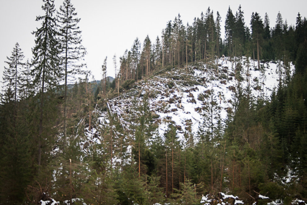 wycinka drzew tatry 02 - Wycinka drzew w Tatrach