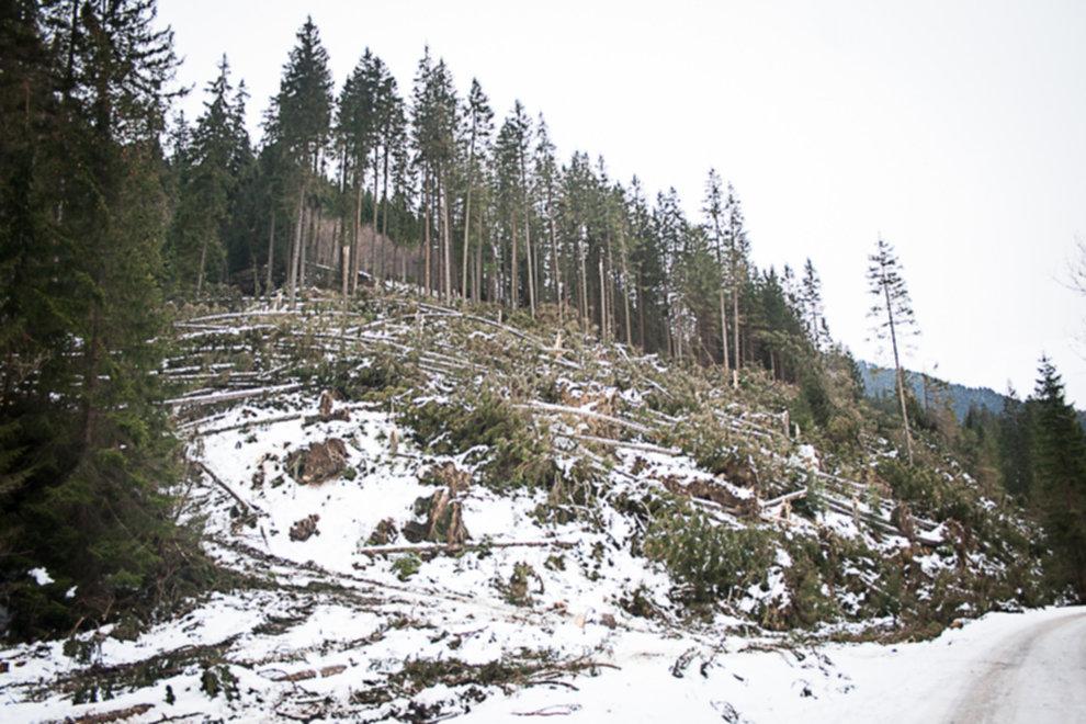 wycinka drzew tatry 03 - Wycinka drzew w Tatrach