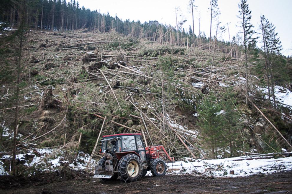 wycinka drzew tatry 07 - Wycinka drzew w Tatrach