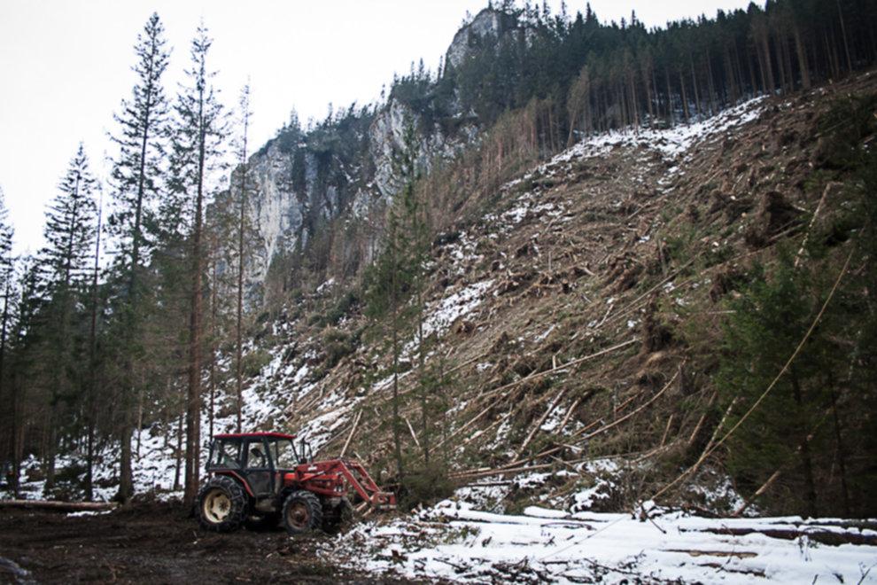 wycinka drzew tatry 08 - Wycinka drzew w Tatrach