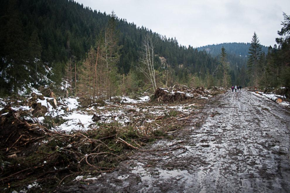 wycinka drzew tatry 09 - Wycinka drzew w Tatrach