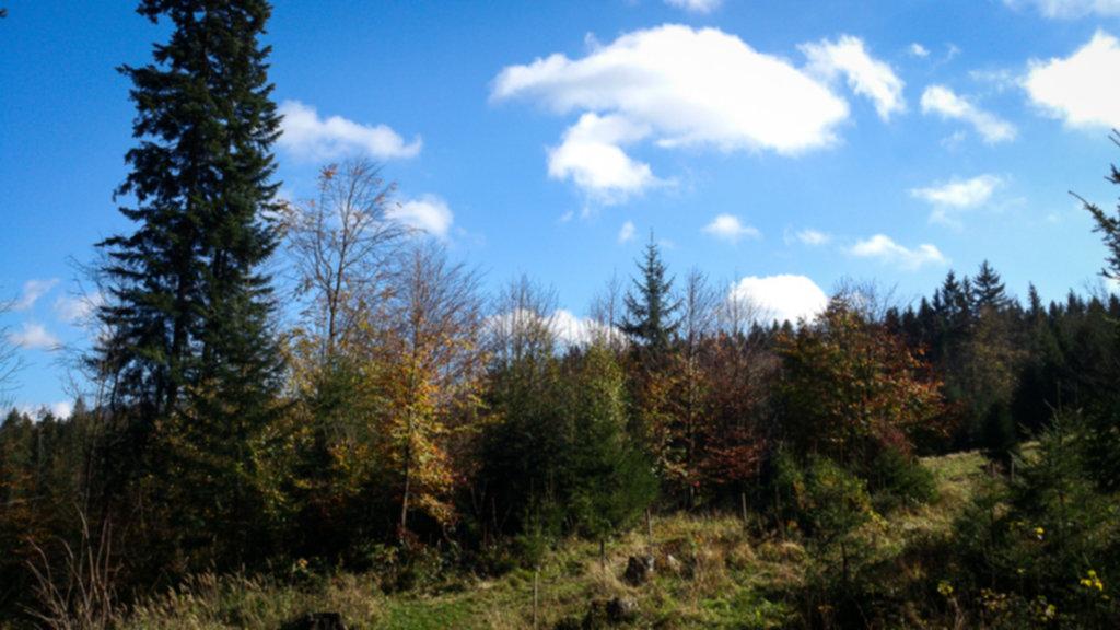 DSC 0080 1024x576 - Wielka Rycerzowa - jeszcze jesień