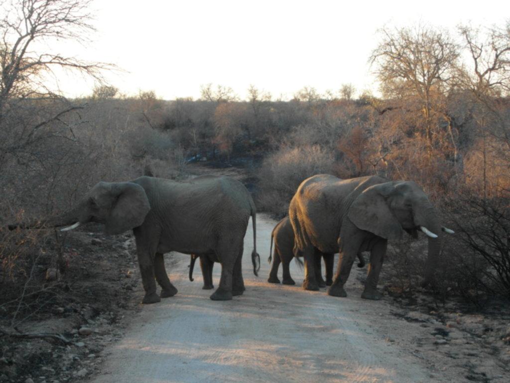 RPA 099 1024x768 - Park Narodowy Krugera - safari!
