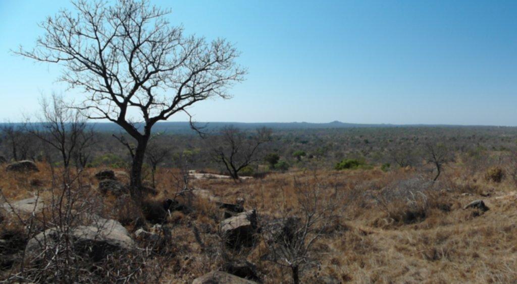RPA 315 1024x564 - Park Narodowy Krugera - safari!