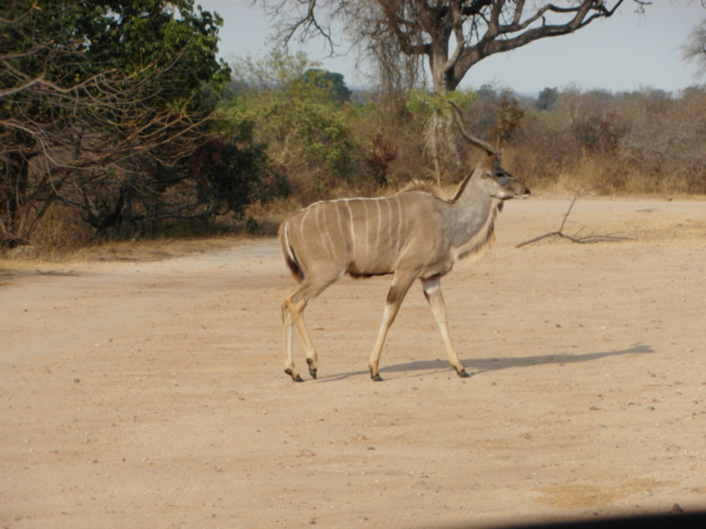 RPA 367 1024x768 - Park Narodowy Krugera - safari!