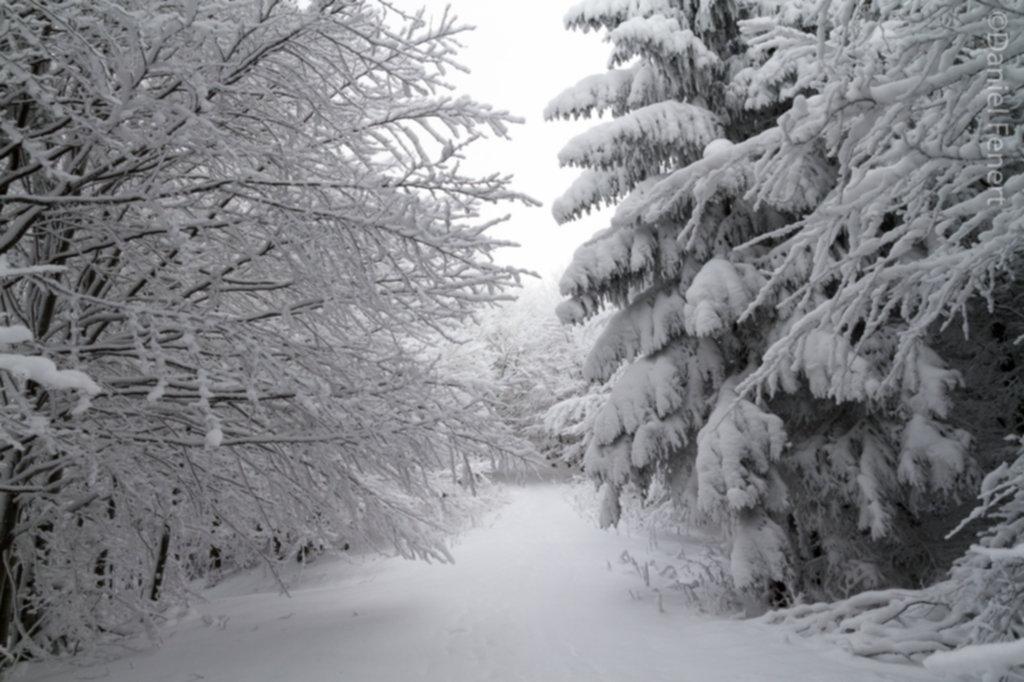 IMG 1981 1024x682 - Zima w Beskidzie Wyspowym
