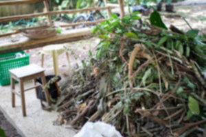IMG 3981 300x200 - Siquijor – spotkanie z szamanem