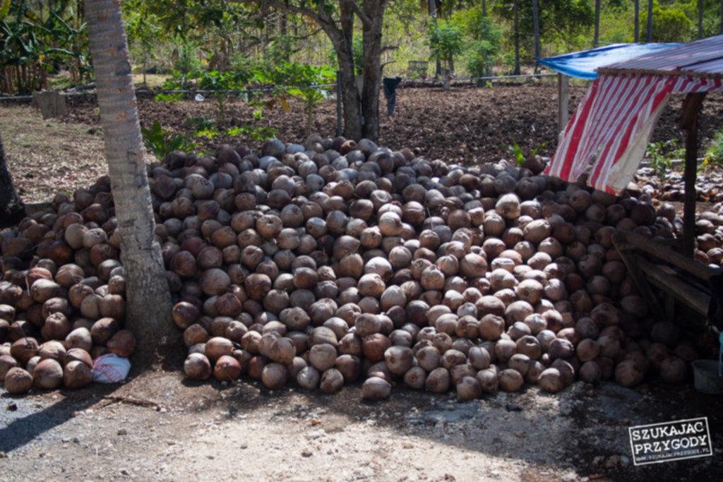 IMG 5900 1024x683 - Czysty olej kokosowy