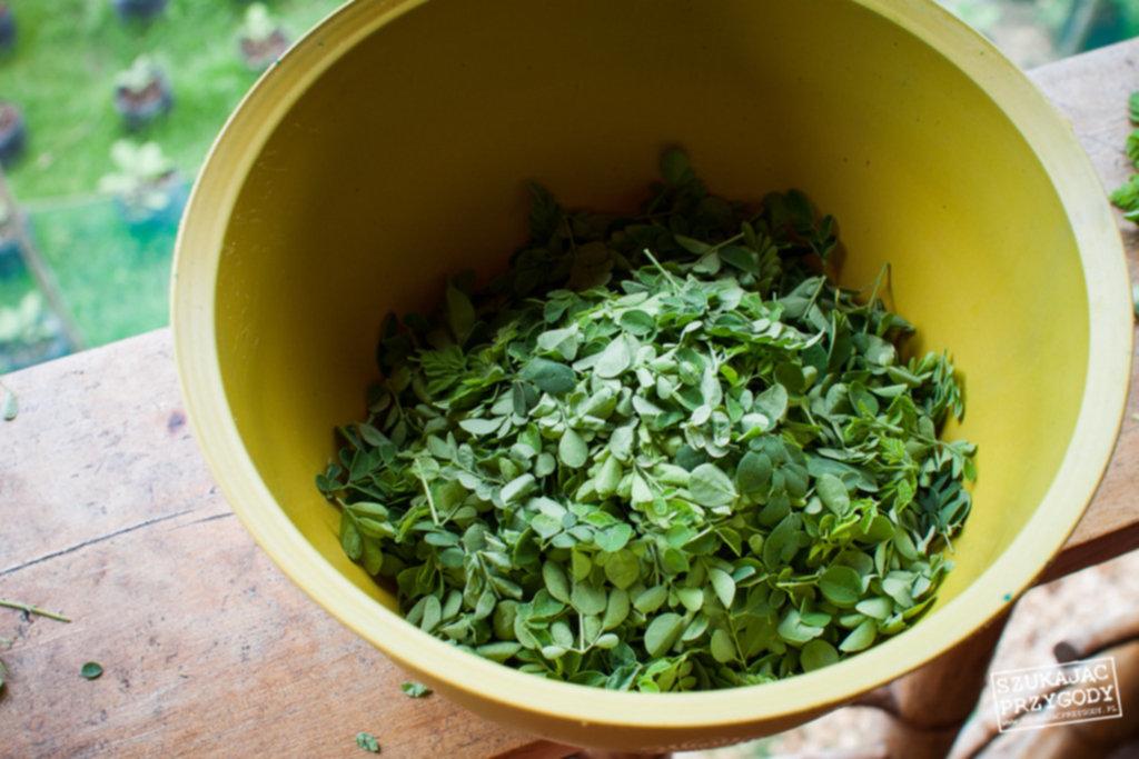 IMG 66001 1024x683 - Moringa – zupa warzywna