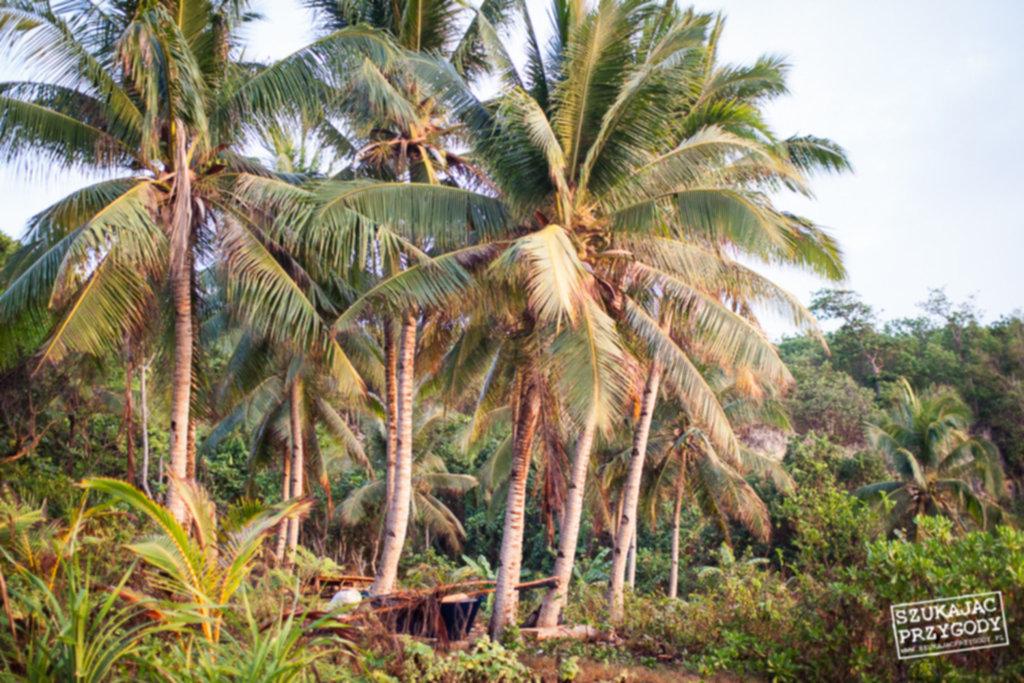 IMG 7984 1024x683 - Biwak na dziewiczej plaży - Siquijor