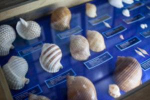 IMG 8915 300x200 - Muzeum muszli - Siquijor