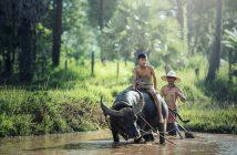 buffalo 1807517 1280 214x140 - Jak się przygotować na pierwszy wyjazd do Azji?