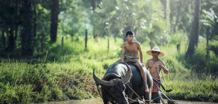 buffalo 1807517 1280 702x336 - Jak się przygotować na pierwszy wyjazd do Azji?