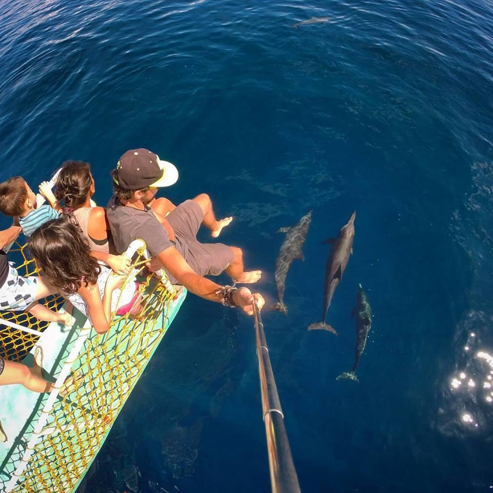plywanie z delfinami - Atrakcje turystyczne w okolicy Dumaguete